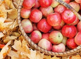一组红红当然苹果看着都特别舒服
