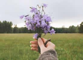 一组小清新的简单花束图片欣赏