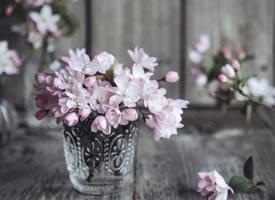 對春花的美總是毫無抵抗力