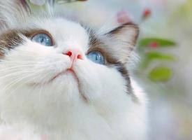 一组可爱萌系猫咪高清图片欣赏