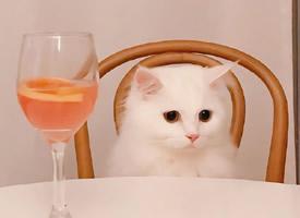 超可爱小猫图片高清手机壁纸