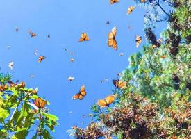 墨西哥的蝴蝶谷 像是小說里的風景