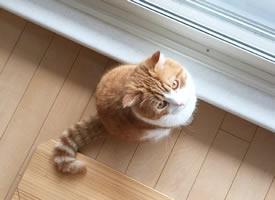 一组超级可爱长的胖胖的小橘猫图片