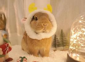 一組超級可愛呆萌的小兔子圖片欣賞