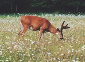 一组美丽的麋鹿图片欣赏