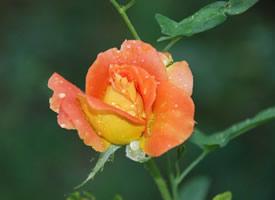 清新淡雅花卉微距摄影图片桌面壁纸
