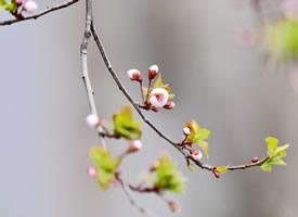 清新淡雅植物花卉微距摄影图片高清壁纸