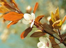 清新护眼植物高清图片宽屏壁纸