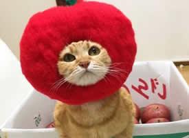 一只擅长cosplay的猫图片欣赏