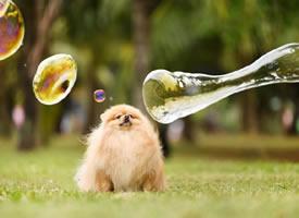 一组超级开心的小狗狗拍摄图片欣赏