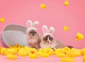 一组超级可爱的喵喵小仙女图片