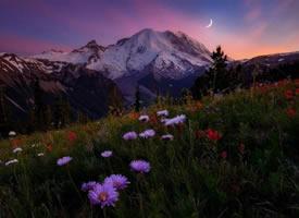春天里到处开满了野花特别美的风景图片