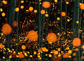 一组超级漂亮的夜景--萤火虫之森