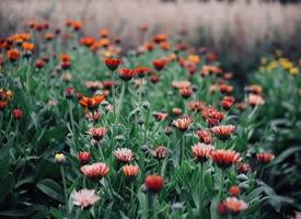 有時候,你得停一下腳步,等一等心靈,讓心情平和