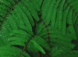 綠色植物高清攝影圖片電腦壁紙