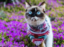 住在圣地亚哥的wiley,最喜欢的事就是在花丛里拍照 ????