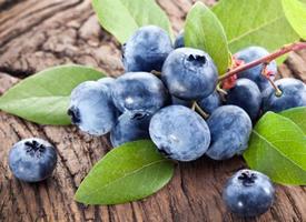 一组还挂在树上超级新鲜的蓝莓图片欣赏