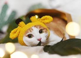 小橘呀,快点变成超级大橘猫吧