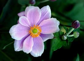 唯美清新的花卉圖片電腦壁紙