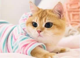 一个可爱的宝宝的圆溜溜的小猫