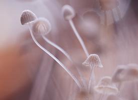 小巧精致的蘑菇唯美高清图片欣赏