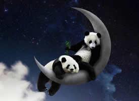 Mr.Panda的奇幻冒险之旅图片欣赏