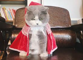 小猫咪带上小红帽都不好惹了