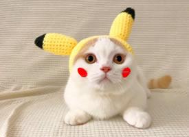 一组超级可爱扮皮卡丘的小猫图片欣赏