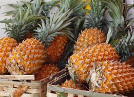 伴有淡淡的清香味的新鲜菠萝图片
