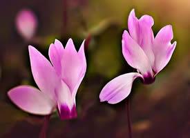 施人之恩,不发于言。受人之惠,不忘于心