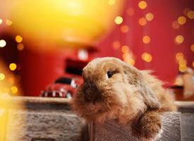 一組超級可愛萌翻了的小兔兔圖片欣賞