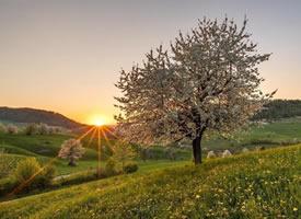 日出就代表这美好的希望