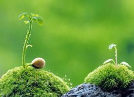 綠色護眼清新植物特寫高清桌面壁紙