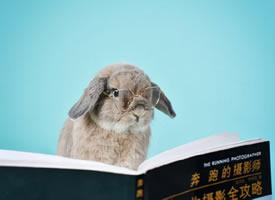 一個超級可愛的兔兔小可愛圖片欣賞