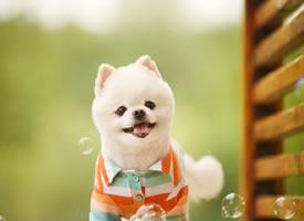 不同小狗狗在花丛中的表现都很可爱