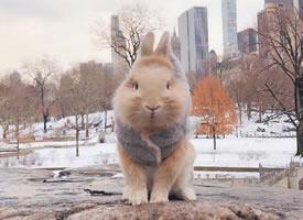 養一只可愛的兔兔,帶它一起去旅行