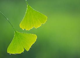 清新植物綠葉高清桌面壁紙欣賞
