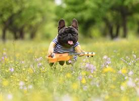 开心到起飞的小狗狗图片欣赏