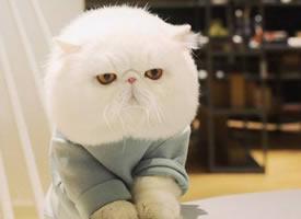 一组超级可爱的白色小猫咪图片欣赏