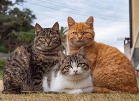 一组超级可爱的小猫咪集体照片欣赏