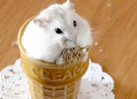 这么可爱的糯米团子冰激凌,怎么下得去嘴啊喂