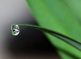 一组植物上晶莹剔透的水珠图片