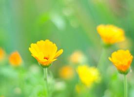 精选唯美植物花卉图片桌面壁纸