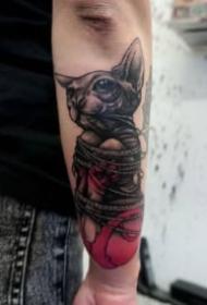 猫刺青图片 一组动物宠物猫的纹身图片欣赏