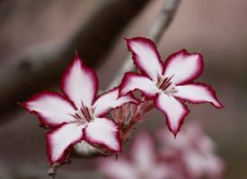 唯美养眼的花卉图片桌面壁纸
