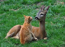 猫咪遇上小鹿,像童话故事一样美好