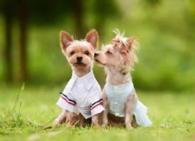 一组超级可爱的情侣小狗狗图片