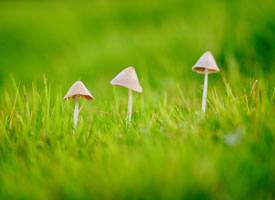 清新护眼的小蘑菇图片桌面壁纸