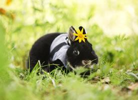 這個兔兔給自己的鼻子打了一圈高光