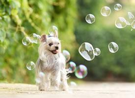 一组有各个种类的小狗狗图片欣赏